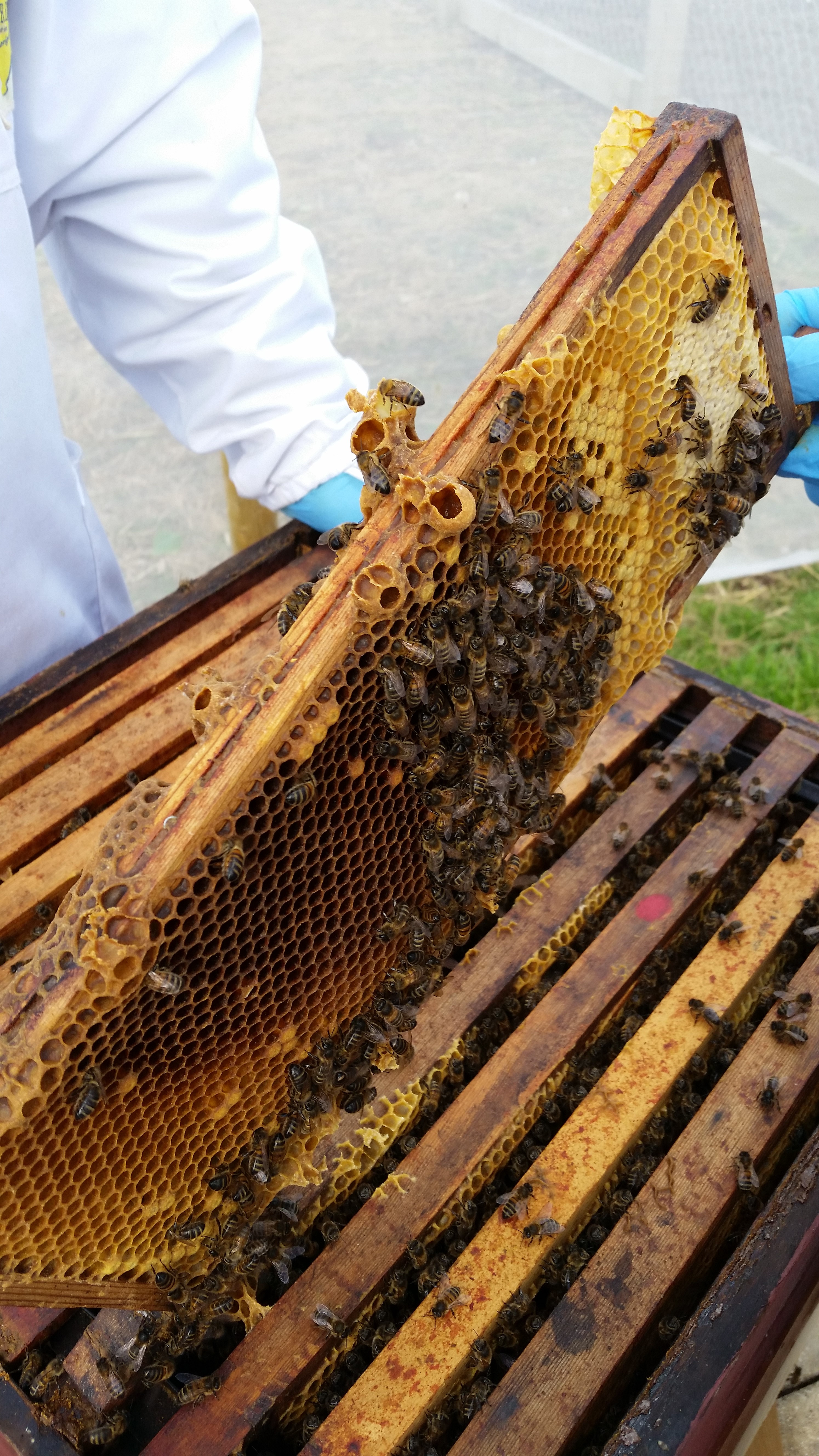 EMS Bee Keeping 2 2015